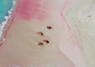 Dario Item Gallery Barbuda Pink Sand Beach (11)