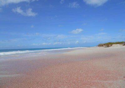 Dario Item Gallery Barbuda Pink Sand Beach (5)