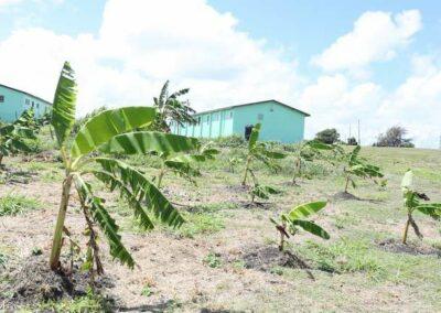 Dario Item News Antigua and Barbuda Defence Force contributing to National Food Security (1)
